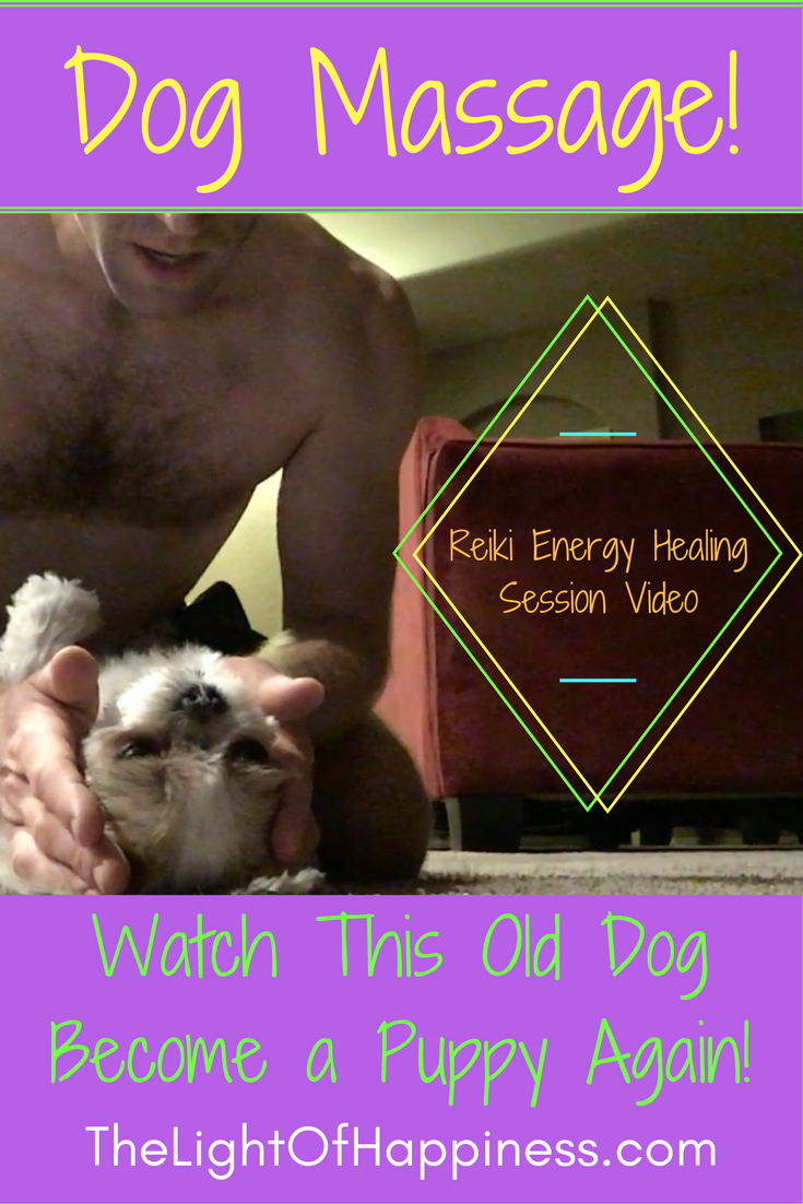 Dog Massage Reiki Energy Healing Session Watch This Old Dog Become a Puppy Again